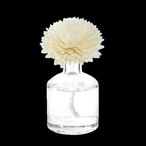 Web Sola Chrysanthemum